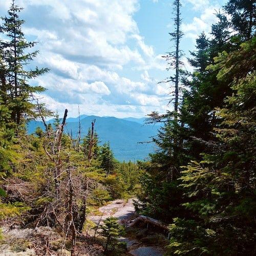 Trees on a mountain>