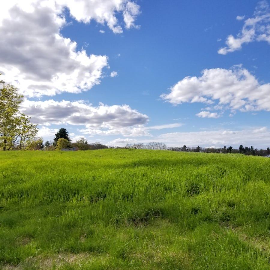 field in summer